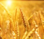 Olimpiada Wiedzy i Umiejętności  Rolniczych